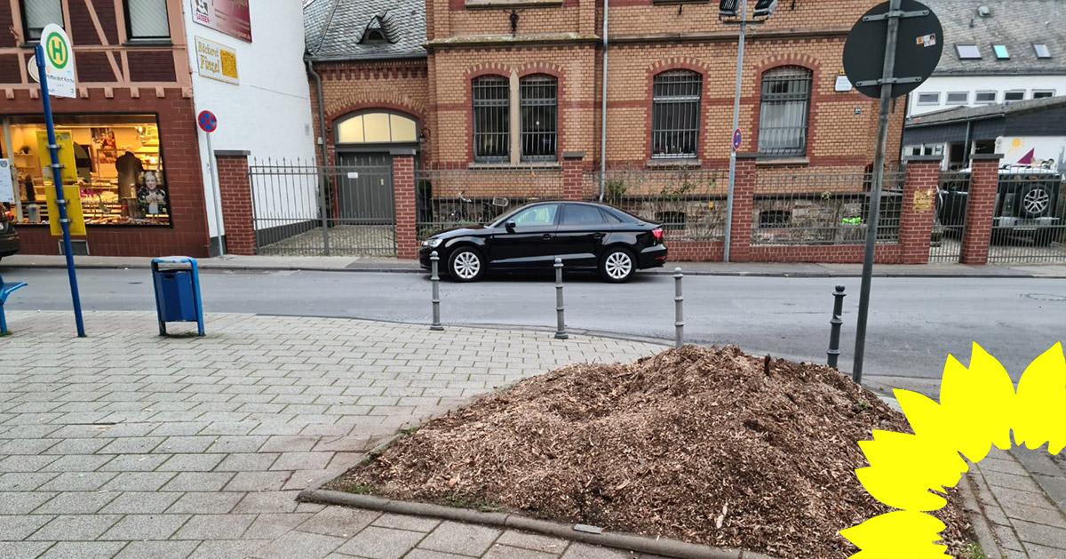GRÜNE fordern eine stärkere Einbindung des Stadtrats bei der Planung von Baumfällarbeiten: Fällung eines alten Baumes mitten in Pfaffendorf hätte verhindert werden können